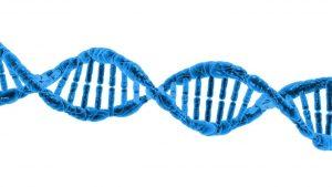 קולגן הוא חלבון גדול מאוד המיוצר בתאים בתת יחידות קטנות המצטרפות ליחידה אחת ובונות את העור